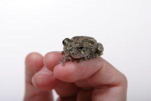 frog-on-hand